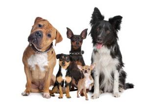 Honden-vangkooi