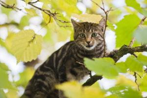 Katten-vangkooi