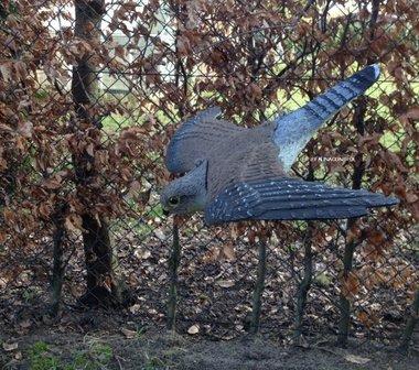 Torenvalk vogelverschrikker